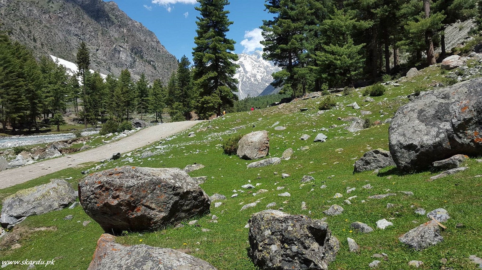Naltar valley a beautiful place to visit in gilgit
