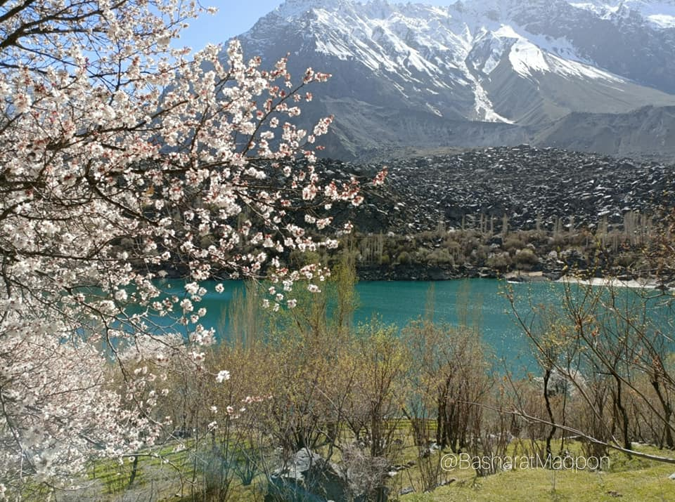 Apricot Blossom in Kachura Lake Gilgit Baltistan