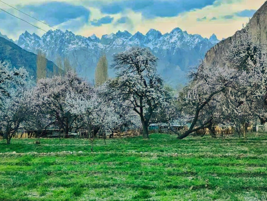 Blossom in Khaplu Valley